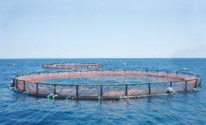 تولید سازههای پلی اتیلنی پرورش ماهی درقفس